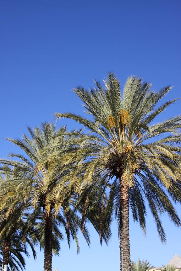 0_PALM_TREE