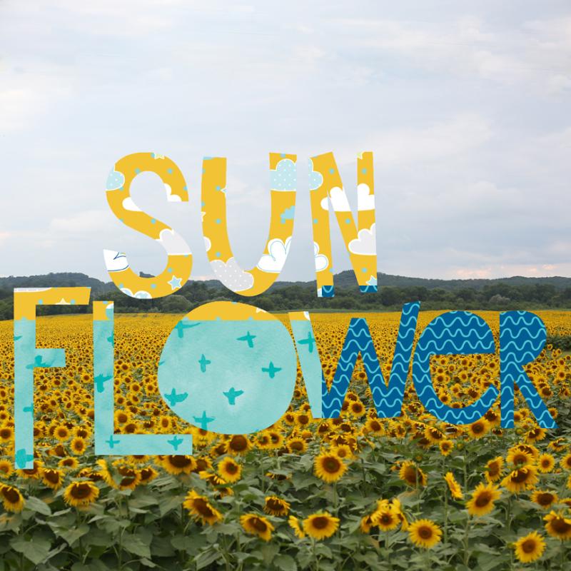Meganklauer_sunflowers2